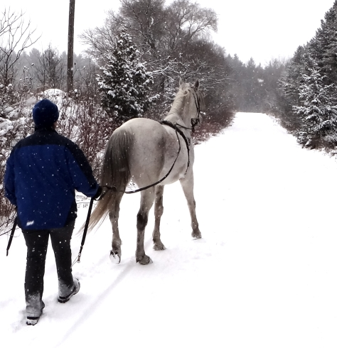 Grey horses look rather magical in the snow