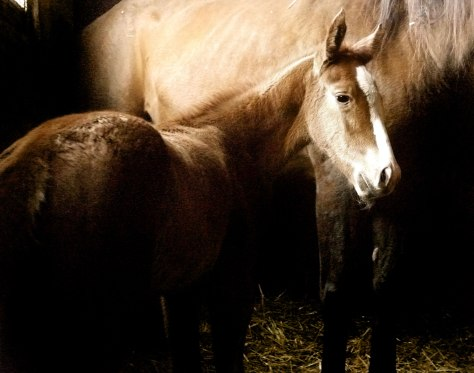 Bernice's flashy little chestnut filly