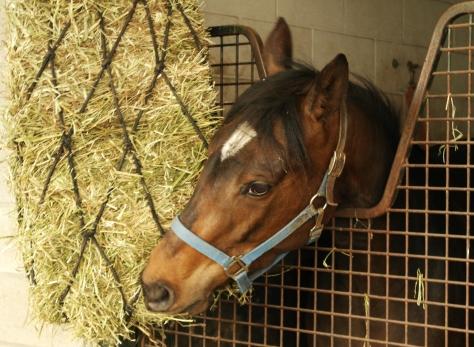 Esmerelda was very impressed by the hay net