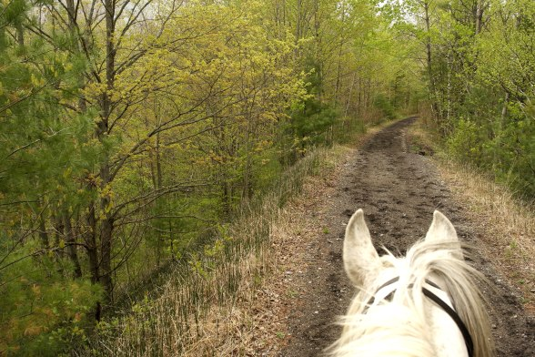 Travelling along the rail trail at Cayuse Canter